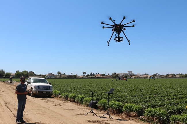 A drone flying over a strawberry field in Lompoc, Calif. (Photo by Elvira de Lange)