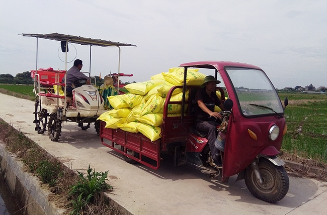 Rice farmers hauling nitrogen fertilizer to their young rice fields—200 kg (four of the large yellow sacks per hectar) will be used as a first fertilizer application. Later in the season, the farmers also apply phosphorous and potassium, according to UC Davis agricultural entomologists Christian Nansen. This photo was taken in Hangzhou in the Zhejiang Province.(Photo by Christian Nansen)