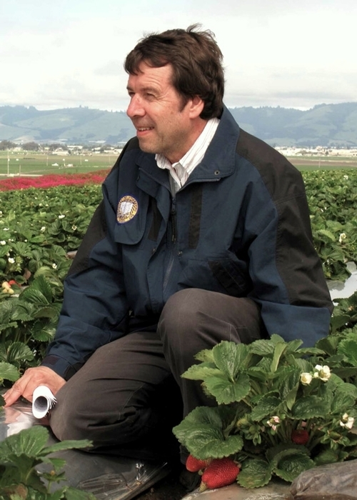 Frank Zalom, shown here in a strawberry field, is the recipient of the 2017 B.Y. Morrison Medal, established in 1968 by U.S. Department of Agriculture/Agricultural Research Service (USDA-ARS).