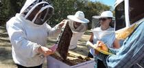 Extension apiculturist Elina Lastro Niño (far left) teaching a bee course at the Harry H. Laidlaw Jr. Honey Bee Research Facility. (Photo by Kathy Keatley Garvey) for Entomology & Nematology News Blog