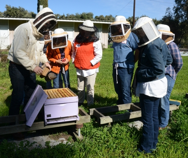 A beekeeping class at the UC Davis Harry H. Laidlaw Jr. Honey Bee Research Facility. (Photo by Kathy Keatley Garvey)
