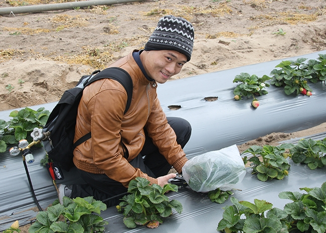 "Hoang Danh ""Derrick"" Nguyen, who is studying for his master's degree in entomology with major professor Christian Nansen, is shown here sampling insects from strawberry plants. (Photo by Christian Nansen)"