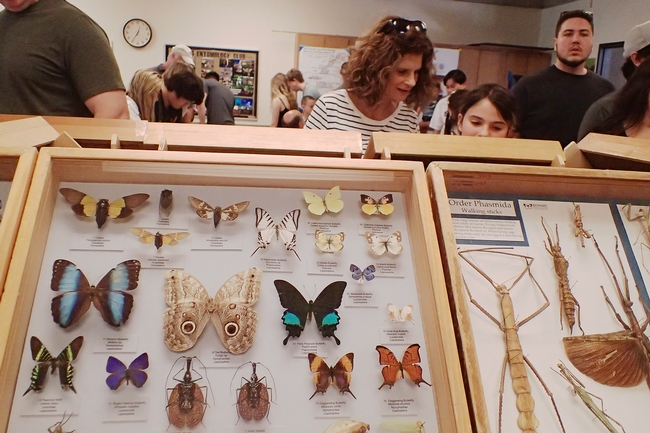 "Briggs Hall showcased nine spectacular or ""oh, my"" drawers of insects (including bees, beetles and butterflies) from the Bohart Museum of Entomology.(Photo by Kathy Keatley Garvey)"
