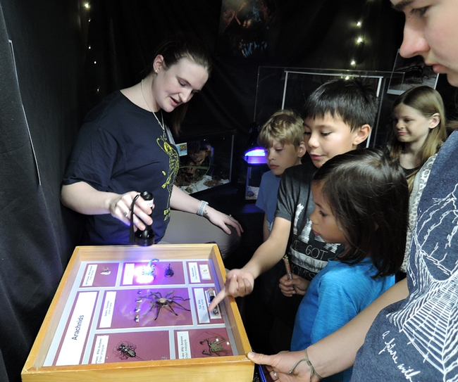 At the Bohart Museum of Entomology, doctoral student Charlote Herbert shines a black light on a scorpion to show how it fluoresces.  (Photo by Kathy Keatley Garvey)