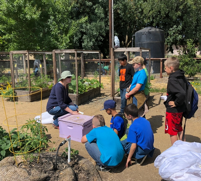 Postdoctoral scholar Laura Brutscher of the Elina Lastro Niño lab talks bees to a group of third graders from Amador County. (Photo by Kathy Keatley Garvey)