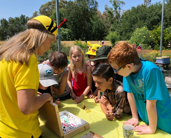 Wendy Mather, manager of the California Master Beekeeper Program, shows students some specimens: bee and hover fly pollinators. (Photo by Kathy Keatley Garvey)
