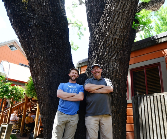 Forest entomologists Steve Seybold and Jackson Audley, his doctoral student, stand at the base of a dying giant black walnut tree on the 100 block of E Street. (Photo by Kathy Keatley Garvey)