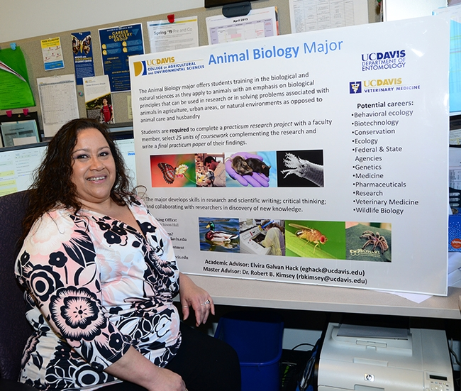The UC Davis animal biology program is housed in the Davis Department of Entomology and Nematology. Academic advisor Elvira Galvan Hack (pictured) assumed her current position in October 2007. (Photo by Kathy Keatley Garvey)