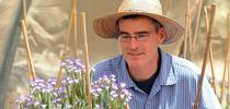 Pollination ecologist Neal Williams, shown here working with blue orchard bees on Phacelia, is a newly inducted Fellow of the California Academy of Sciences. (Photo by Kathy Keatley Garvey) for Entomology & Nematology News Blog