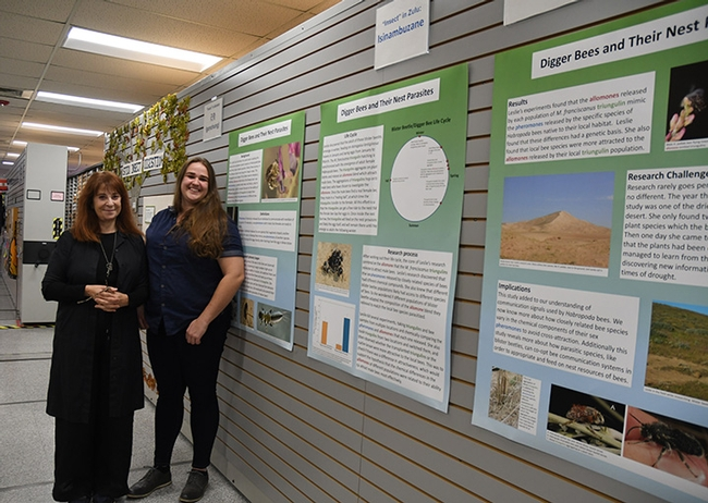 Entomologist Leslie Saul-Gershenz (left) with curator Emma Cluff at the digger bee display, Bohart Museum of Entomology. It will be on display through May 16. (Photo by Kathy Keatley Garvey)