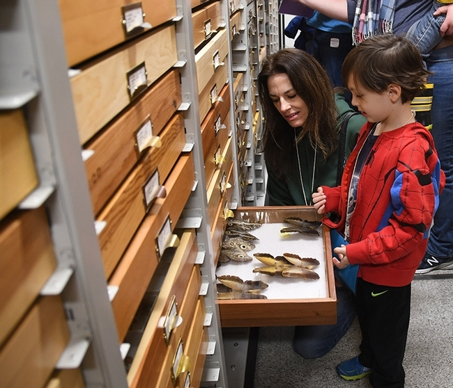 Michelle Belden and son Cash check out butterfly specimens at the Bohart Museum of Entomology. (Photo by Kathy Keatley Garvey)