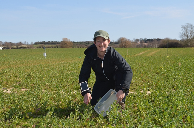 Agricultural entomologist Emily Bick doing field work in Denmark before the lockdown.