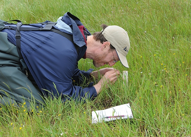 UC Davis Distinguished Professor Jay Rosenheim engaging in research at the Jepson Prairie Preserve, known for its vernal pools. (Photo by Kathy Keatley Garvey)