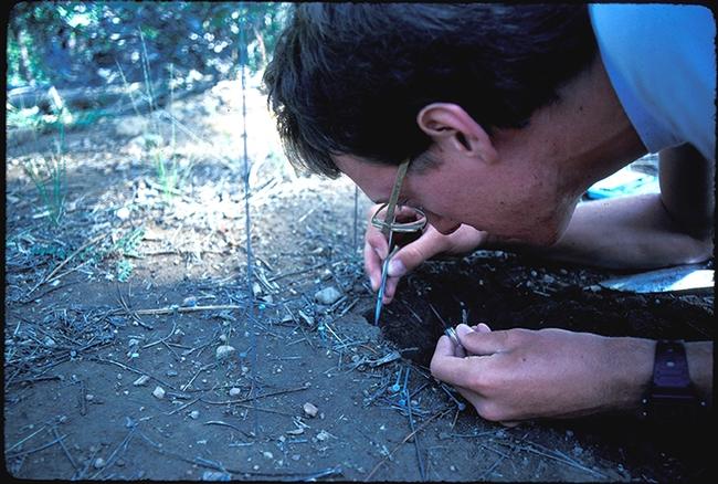 Jay Rosenheim digging a nest at UC Berkeley's Sagehen Creek Field Station, Truckee, in 1984.