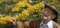 Professor Emeritus Eric Conn, a noted plant biochemist who nurtured the UC Davis Arborteum's acacias for scientific as well as aesthetic reasons, died Sept. 2, 2017. He was 94. The Arboretum is part of the College of Agricultural and Environmental Sciences.(UC Davis Photo) for Entomology & Nematology News Blog
