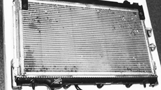 Professor Lynn Kimsey identified the bugs on this radiator.