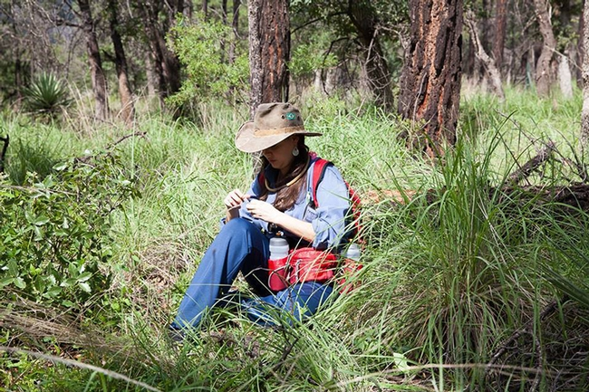 Postdoctoral researcher Manuela Ramalho of Cornell University working in the field. (Brian Fisher image)
