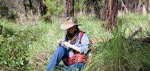 Postdoctoral researcher Manuela Ramalho of Cornell University working in the field. (Brian Fisher image) for Entomology & Nematology News Blog