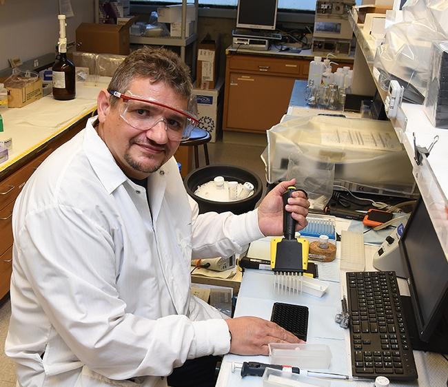 Researcher Christophe Morisseau at work in the Bruce Hammock lab. (Photo by Kathy Keatley Garvey)