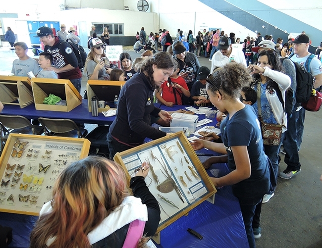 Tabatha Yang, Bohart Museum education and outreach coordinator, is surrounded by excited third graders at the 2017 Solano County Youth Ag Day, Solano County Fairgrounds. They are looking at the traveling display cases of insects. (Photo by Kathy Keatley Garvey)