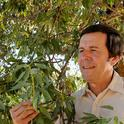 Frank Zalom, shown here by an almond tree, directed the UC Statewide Integrated Pest Management Program for 16 years, 1986-2002. (Photo by Kathy Keatley Garvey)