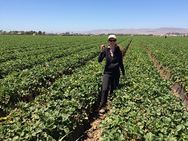 Entomologist Elvira de Lange, shown here in a strawberry field, says that agricultural drones are