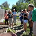 Food Gardening Specialist workshop at the Harvest for the Hungry Garden on May 12, 2018. Tobi Brown, UC Master Gardener, demonstrates how to feed and protect the soil as a garden bed transitions from spring to summer.