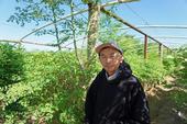 Fresno farmer Vang Thao in his moringa plantation.