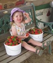 Strawberries! - Pacific Star Gardens