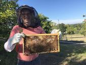 Jonathan Dear, a small animal internal medicine veterinarian and hobbyist beekeeper, holds a frame after inspecting a hive.