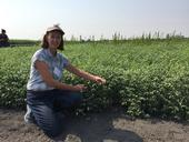 Rachael Long examines a garbanzo field in California for stand health.