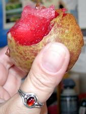 Dapple Dandy pluot. (Photo: Wikimedia Commons)