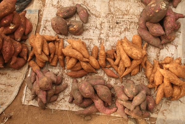 Piles of sweet potatoes freshly harvested from a field in Ghana.