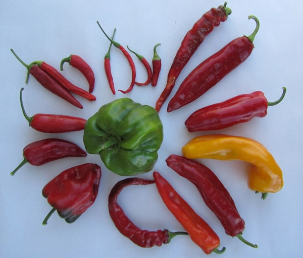 An array of peppers.