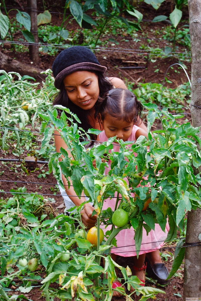 Woman farmer and child in tomato field in Central America.