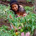 Growing fruits and vegetables for both eating and selling can improve diets and boost incomes.