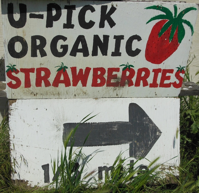 U-Pick strawberry sign