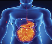 Obesity research plotted onto an illustration of the human digestive system.