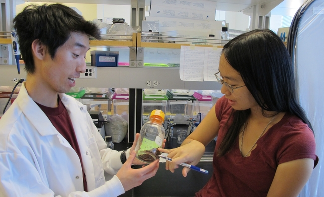 Photo shows Tony Truong and Lauren Wong. (Photo Miller Lab, UC Riverside)