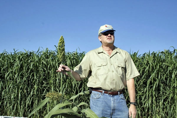Jeff Dahlberg in a sorghum research plot.