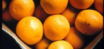 Los Angeles Unified School District has purchased Riverside County oranges over Florida citrus through its local food purchasing initiative. for Food Blog Blog