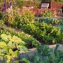 A beautiful edible garden.