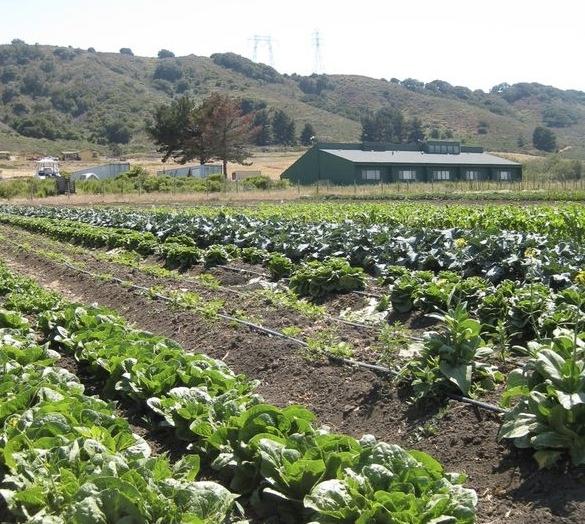 San Luis Obispo county Farmscape