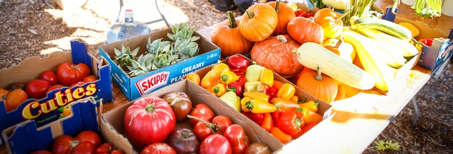 Our Garden - produce that gets donated to local crisis center. © University of California