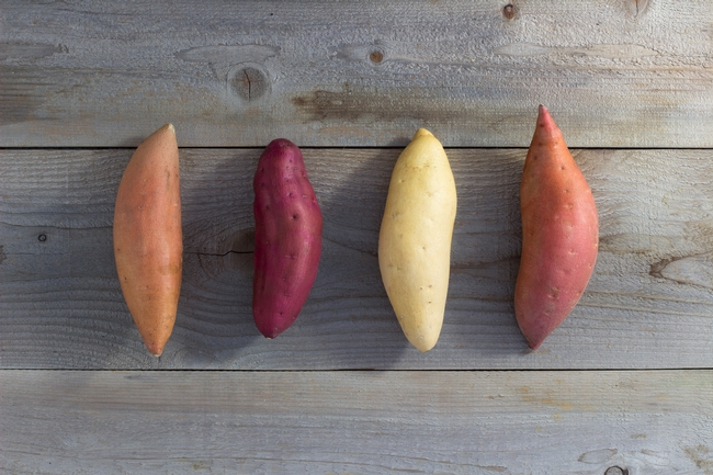 Sweetpotato classes, from left, are Jewell, Oriental, Jersey and Garnet. Photo courtesy of the California Sweetpotato Council.