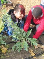 Growing vegetables in a garden is part of a program to improve children's eating habits.
