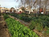 City Slicker Farms' community market farm in Oakland