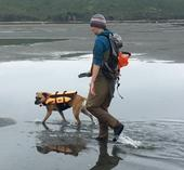 Missy Partyka of WIFSS walks with her dog Lady Jane along the muddy flats of Tomales Bay look for clams.