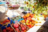 Food harvested by UC Master Gardeners a