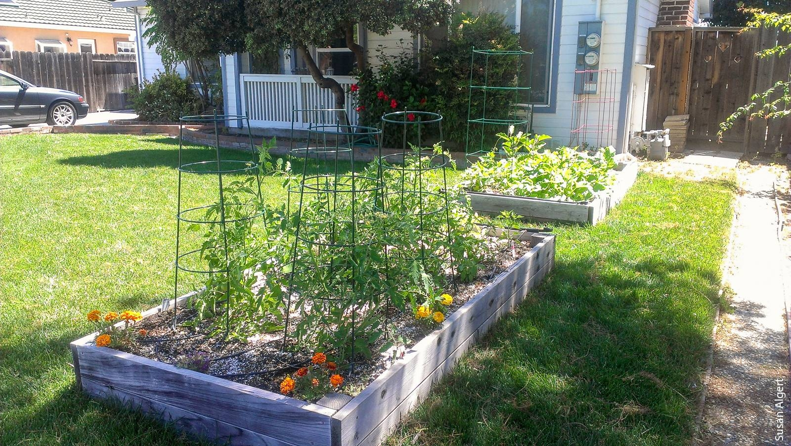 Home produce garden - Snap Benefits Can Be Used To Purchase Seeds And Plants To Grow Produce